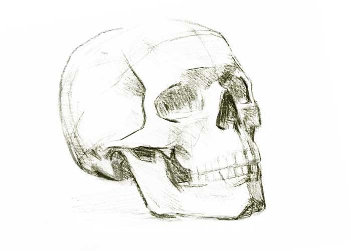 Skull sketch #2
